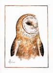 Watercolor Barn Owl Jay by aryalynx