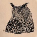 Eagle Owl Drawing Aiko