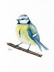 Watercolor Bluetit Flou