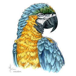 Watercolor blue-and-yellow macaw Lu