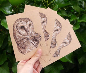 Set of 4 Barn Owl Drawing Postcards