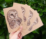 Set of 4 Barn Owl Drawing Postcards by aryalynx