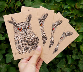 Set of 4 Eagle Owl Drawing Postcards by aryalynx
