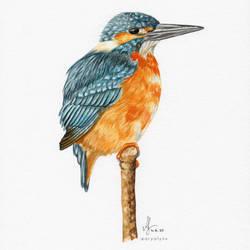 Watercolor Kingfisher 'Ellie'