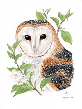 Watercolor Barn Owl 'Lilith'