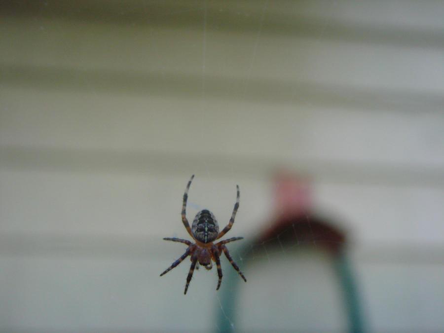 scary little spider by brandonwaugh5 on deviantart