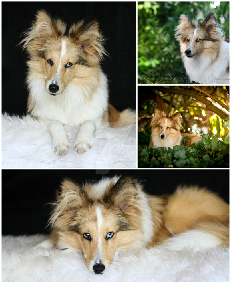 .:My lovely Dog:. by TheCoolFrog