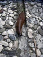 Slug 1 by LexartPhotos