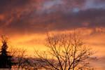 sunset in vienna 2