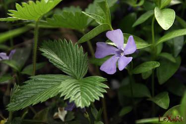 violet by LexartPhotos