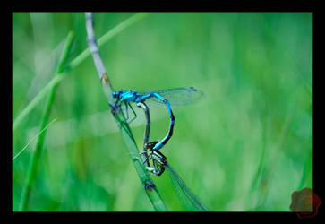 Dragonfly by Il-Gritz