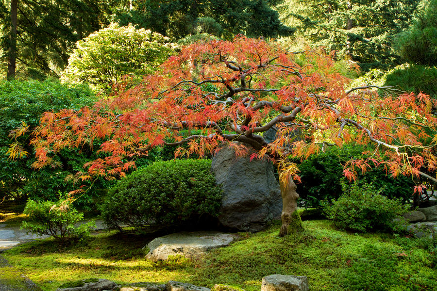 Japanese Maple Tree By Sonjaphotography On Deviantart