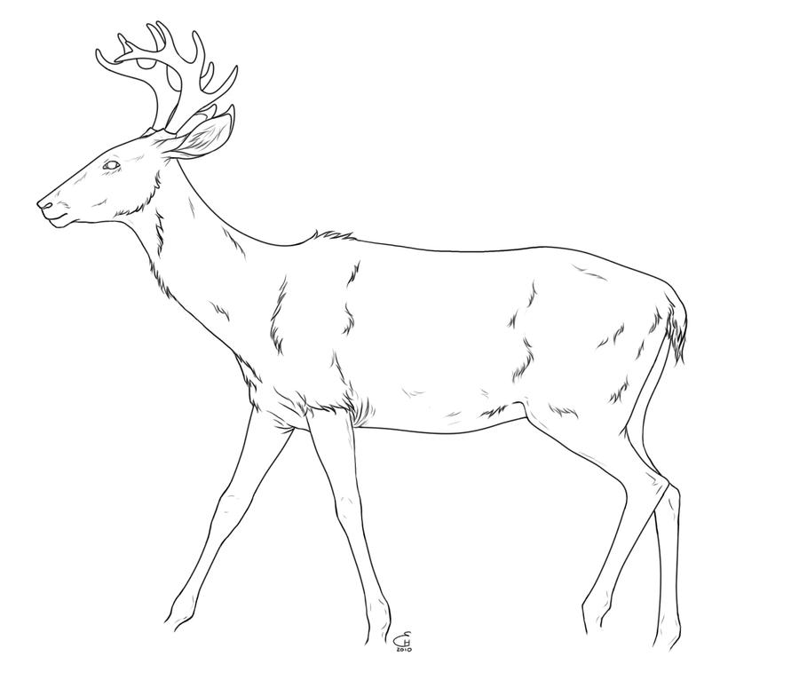 Line Drawing Deer : Deer lineart by hydraequus on deviantart