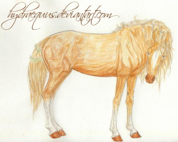 hydraequus's Profile Picture