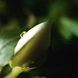 Autumn Bud by Heliotrope1920