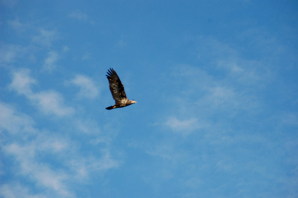 Eagle In The Sky By Baseball6791