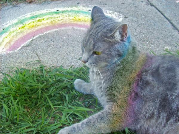 非常彩虹 - 碌碡画报 - 碌碡画报