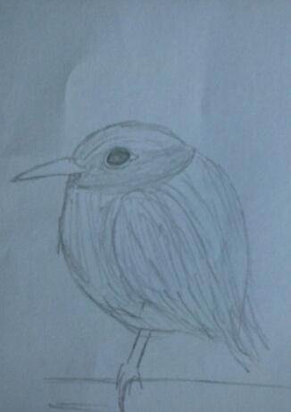 Birdie by Nazus-98