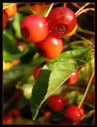 Autumn offering - Oct 2007