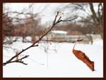 Last leaf - Jan 2008