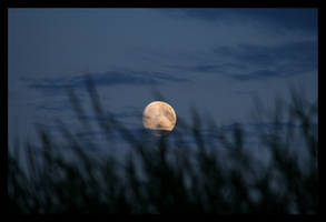 Moonrise on the creek - Aug 08 by pearwood