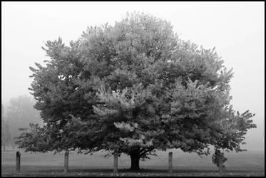 2008-252 Autumn formal - Sept 2008