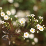 Flowers will bloom - Oct 5, 09