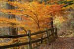 2009-299 Upper Falls path - Oct 2009