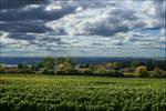 Vineyard - Oct 2010