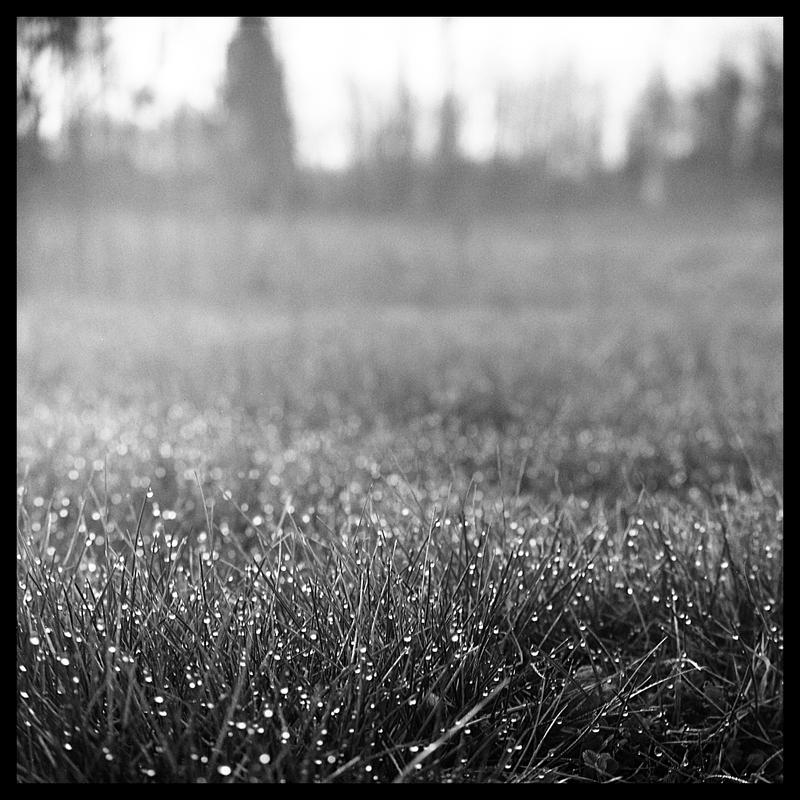 2012-094 Morning dew by pearwood