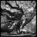2013-011 Angel Oak Reaching