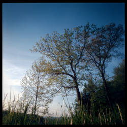 2013-147 Trees on the hill - pinhole by pearwood
