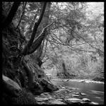 2013-152 Upstream on Wolf Creek