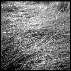 2013-240 Grass matted by pearwood