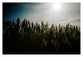 2014-309 Hazy sun by pearwood