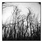 2014-332 My friends, the trees - scan0108