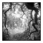 2015-005 Angel Oak - elfwood