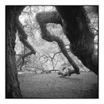2015-006 Angel Oak - shoulders and elbows