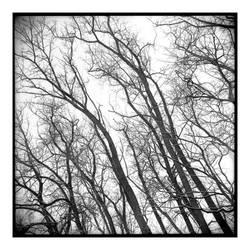 2015-077 Sunday morning trees at Rob's house