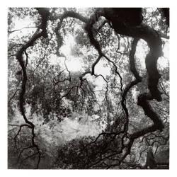 2015-274 Elfwood - scanned print