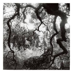 2015-274 Elfwood - scanned print by pearwood