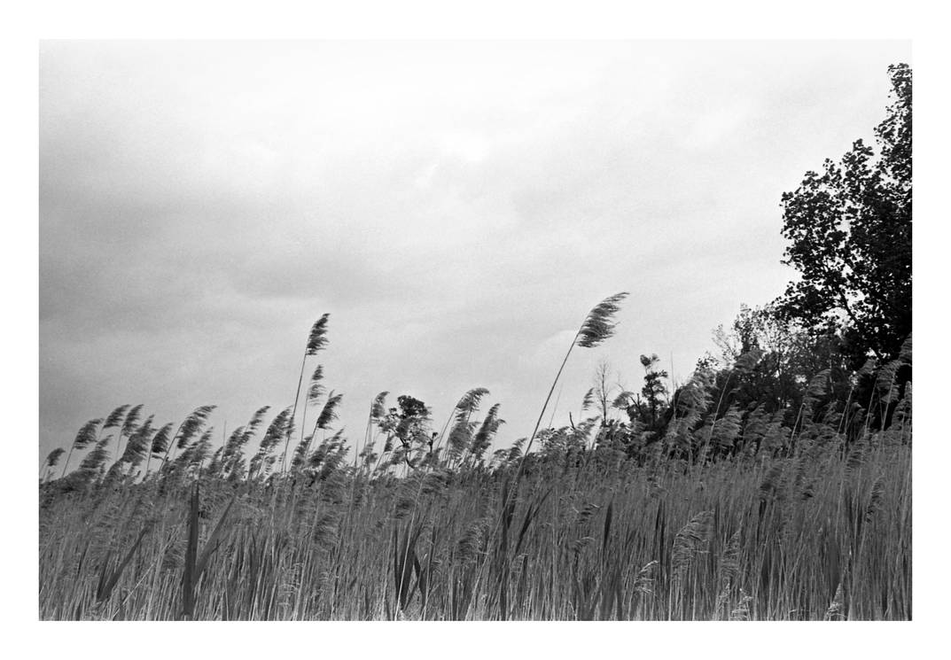 2016-177 Wind and clouds at Mendon Ponds by pearwood