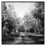 2016-285 Autumn path