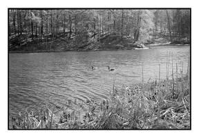 2018-122 Canada Geese on Eastman Lake