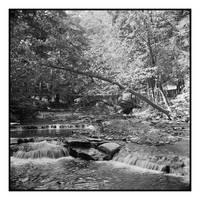 2018-168 Wolf Creek Glen by pearwood