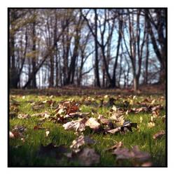 2020-131 Last year's leaves