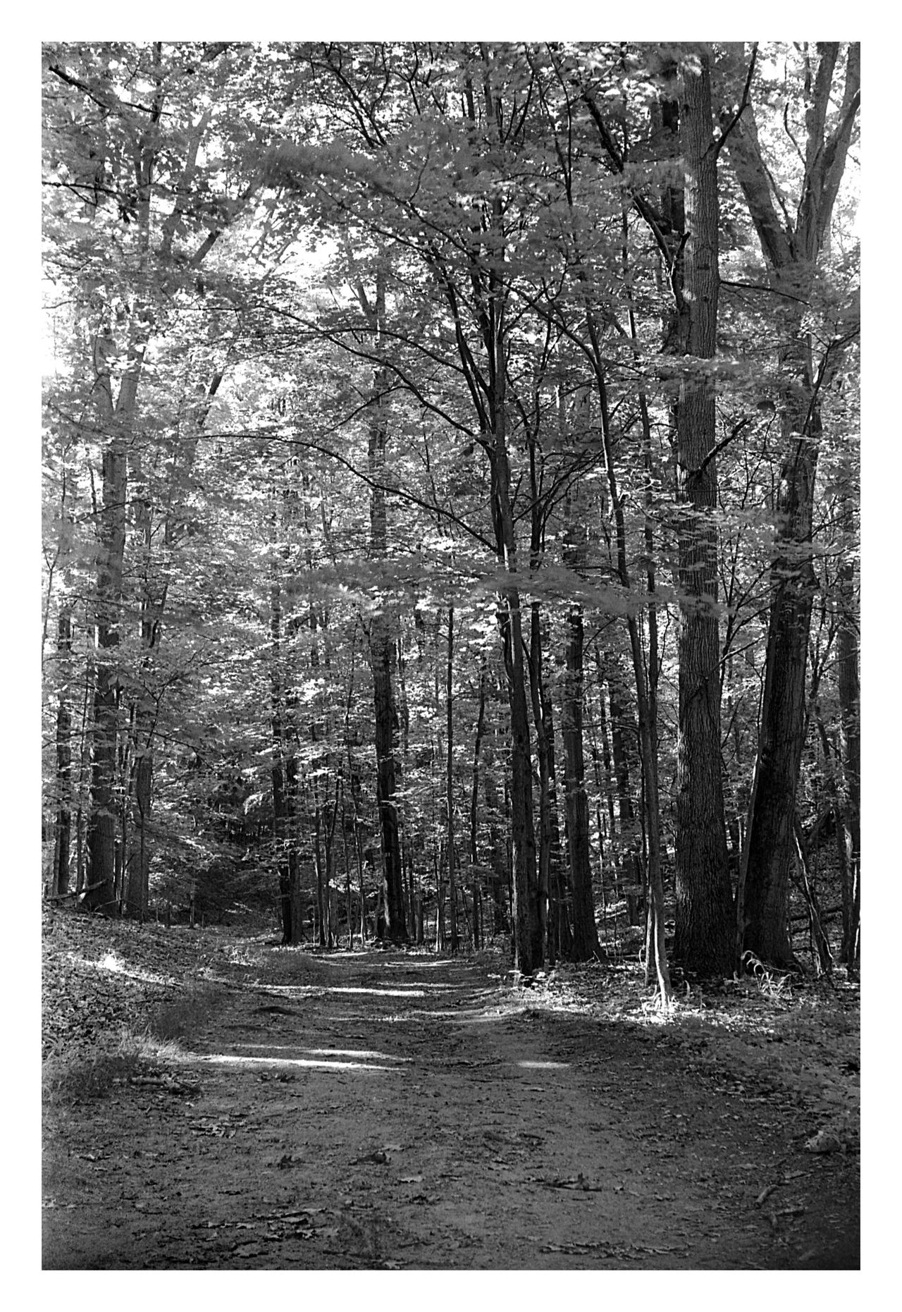 2020-190 Path through the woods