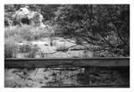 2020-238 Bog at David's Nature Trail