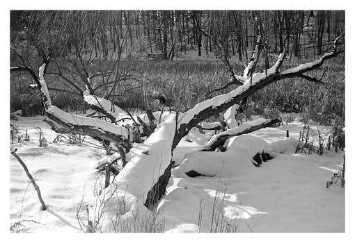 2021-059 Fallen by Eastman Lake
