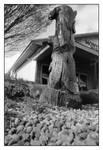 2021-159 Montezuma beaver by pearwood